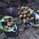 More potatoes