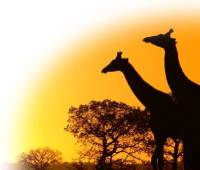 Odinism under the African Sun